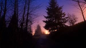 Download, Wallpaper, 1920x1080, Night, Forest, Fog, Path, Trees, Sky, Full, Hd, Hdtv, Fhd, 1080p, Hd