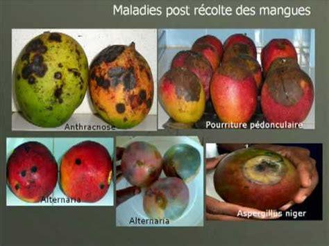 case study sps agreement  export  senegalese mango