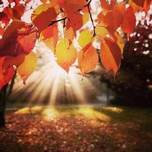 I love fall season the leaves are so cool to bad flu ...