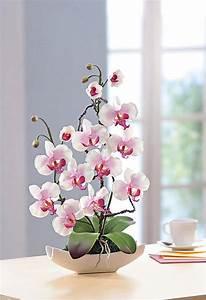 Schöne Orchideen Bilder : die besten 25 orchideen ideen auf pinterest phalaenopsis luftpflanzen pflege und lila kleine ~ Orissabook.com Haus und Dekorationen