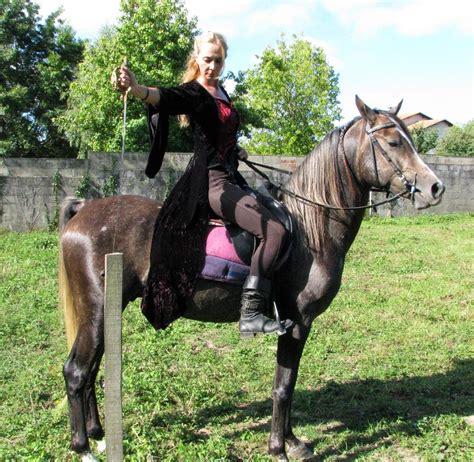 human horse deviantart
