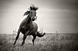 Tierbilder Schwarz Weiß : mehr als 70 super sch ne pferde bilder ~ Markanthonyermac.com Haus und Dekorationen