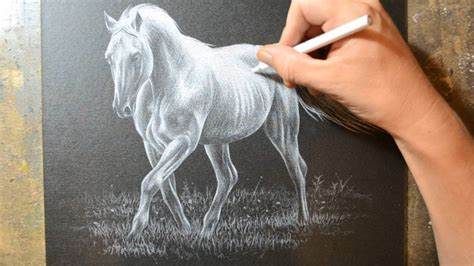 drawing  horse   white colored pencil crayon youtube