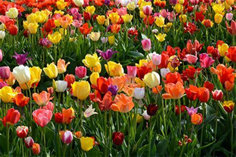 Veldheer Tulip Garden by Veldheer Tulip Garden Mi 2019 Review Ratings