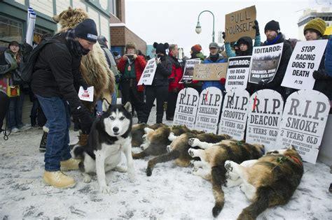 image issues hound start  alaskas iditarod sled dog race