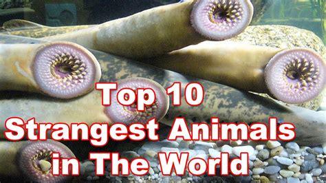 Top 10 Strangest Animals in the World Top 10 Weirdest