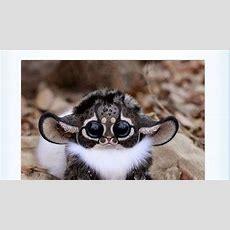 New Monkey Discovered In Madagascar!!! Youtube