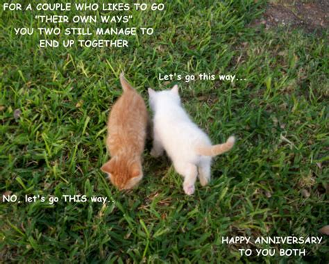 couple kittens    couple ecards greeting cards