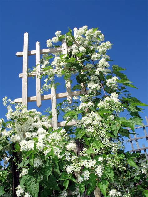 Flower Garden Plant Support - Support Structures And ...