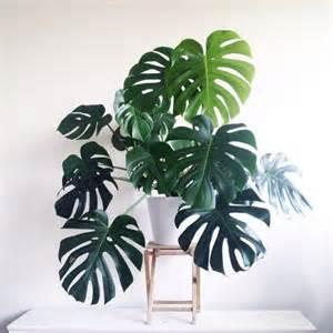 plantes vertes int 233 rieur faciles 224 entretenir