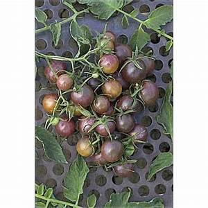 Nistkasten Aufhängen Himmelsrichtung : tomate black cherry tomatoes 39 black cherry 39 39 black plum 39 and 39 black 39 tomato seeds ~ Frokenaadalensverden.com Haus und Dekorationen