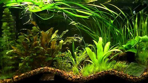 substrate for aquarium plants my planted aquarium dirt substrate