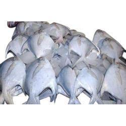 pomfret fish  bengaluru latest price mandi rates