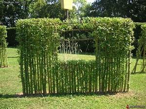 Cloture Pour Jardin : 25 best ideas about cloture vegetale on pinterest ~ Edinachiropracticcenter.com Idées de Décoration