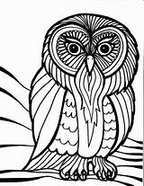 Owl Coloring Outline Cool Pages Adults sketch template