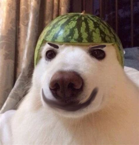 Arise Dog With Watermelon Gang Hypixel Minecraft