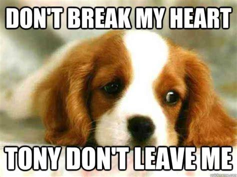 Sad Dog Meme - dog don 39 t leave meme
