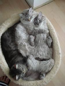 Kprkquae Bilder Blog Lustige Katzen Katze Will Lustig