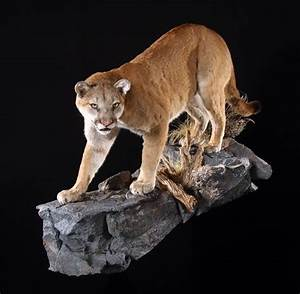 The Wildlife Gallery Custom Taxidermy Studio - Mountain