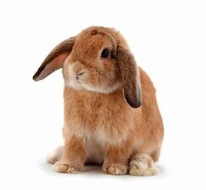 Sanddorn Männlich Weiblich Unterschied : beliebte kaninchennamen von a bis z m nnlich weiblich ~ Lizthompson.info Haus und Dekorationen