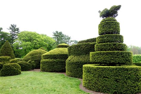 Topiary : Opinions On Topiary