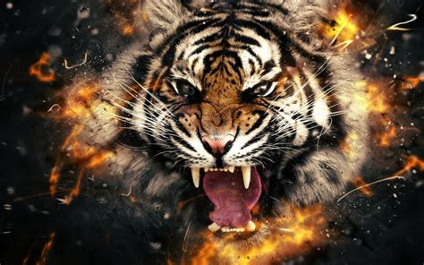Tiger Wallpaper Wallpapers Backgrounds