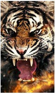3D 4k Tiger Wallpaper   HD Wallpapers , HD Backgrounds ...
