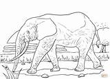 Coloring Elephant African Pages Animals Forest Savanna Grassland Drawing Clipart Supercoloring Printable Animal Drawings Indian Preschool Clip sketch template