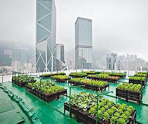 Urban Gardening Definition :  ~ Eleganceandgraceweddings.com Haus und Dekorationen