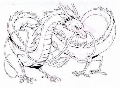 Spirited Away Dragon Ghibli Studio Sketches Haku