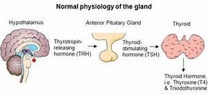 eDucate   Hyperthyroidism overview