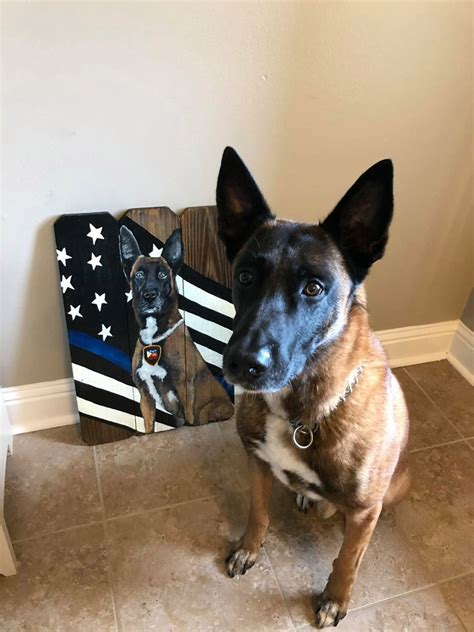 Lafayette Police K9 Achmed officially retired, local ...