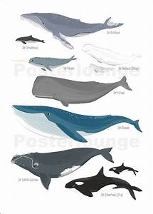 Sandy Lohß Wale Poster online bestellen Posterlounge