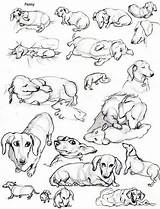 Dachshund Dog Coloring Dogs Laura Wiener Tattoo Hoffman Puppies Clube Weenie Dachshunds Daschund Haired Miniature Breed Weiner Perros Printable Dibujos sketch template