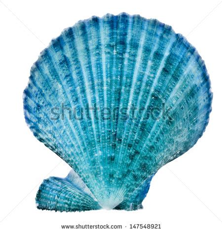 Blue Shell Stock Images, Royaltyfree Images & Vectors