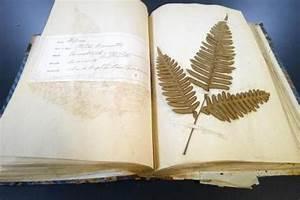 Was Ist Ein Herbarium : was ist ein herbarium und wie man es machen ~ A.2002-acura-tl-radio.info Haus und Dekorationen