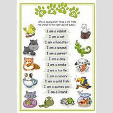 Pet Animals List