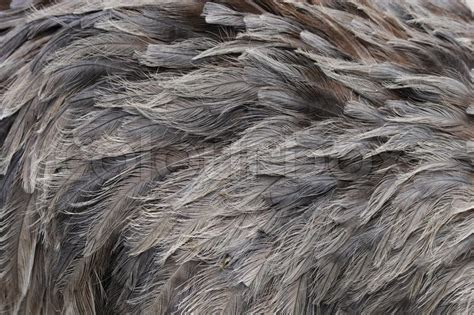 nice brown feather texture  animal background stock