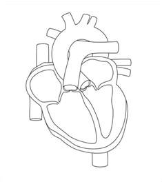 Human Heart Diagram Blank