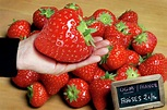 Genetically Modified Strawberry Photograph by Pascal ...