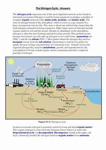 Nitrogen Cycle Fill The Gaps By Nicdg