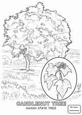 Hawaiian Lei Hawaii Drawing Coloring Pages Ukulele Flower Sketch Getdrawings Printable Drawings Paintingvalley Getcolorings sketch template
