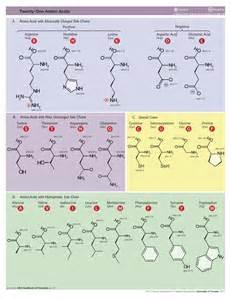 Eneida Hales's blog: Ketoanalogues Essential Amino Acids