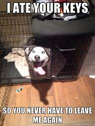 Funny Animal Memes Husky Dogs