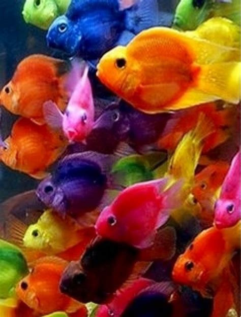 brightly colored fish colors fish