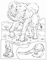 Coloring Pages Elephant Sheets Animal Animals Wildlife Printable Conservation African National Geographic Adult sketch template