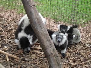 South Lakes Wild Animal Park: Very Rare Babies Born