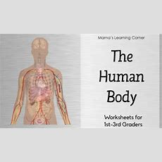 The Human Body Worksheet Packet For 1st3rd Graders  Mamas Learning Corner