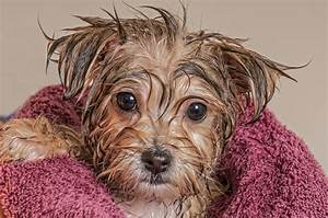 another wet puppy
