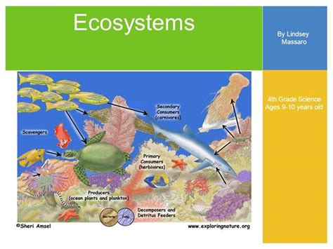 Session 5 Ecosystems Ppt *revised Authorstream